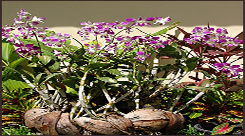 Villa Deluxe Choeng Mon fleurs_resize