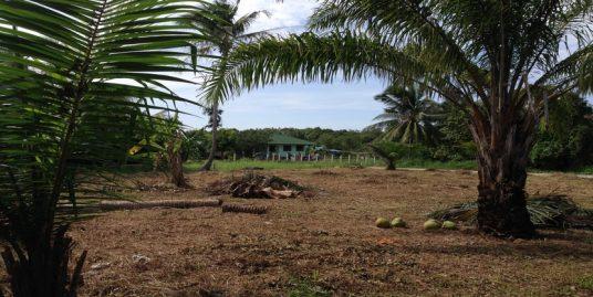 A vendre terrain Chalok Baan Kao Koh Phangan 716 m²