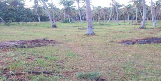 A vendre terrain Koh Phangan Maduawan 1 rai plat cocoteraie