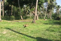 Vente terrain Koh Phangan Wok Tum