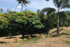 Villas Bangkao Koh Samui a vendre0040