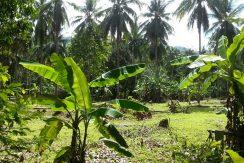 A vendre terrain Koh Samui Lipa Noi 0002