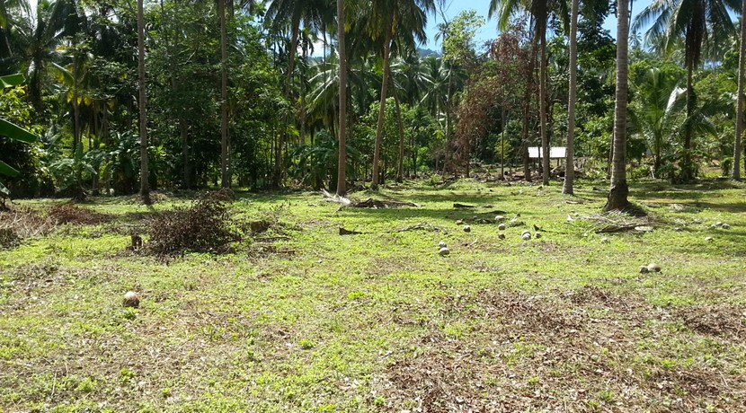 A vendre terrain Koh Samui Lipa Noi 0003