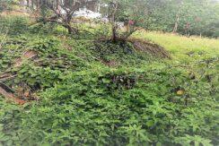 Terrain à vendre Lamai Koh Samui 0001