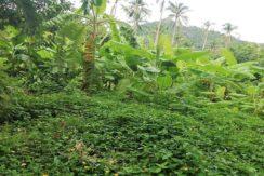 A vendre terrain plat Lamai Koh Samui 03