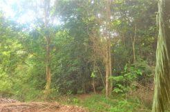 A vendre terrain à Maenam Koh Samui