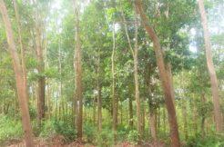 A vendre terrain plat Maenam à Koh Samui