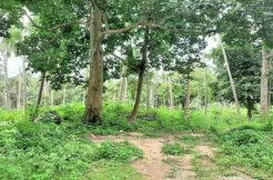 A vendre terrain au centre de Chaweng à Koh Samui