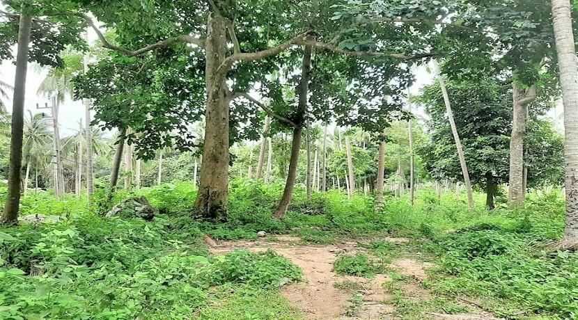 A vendre terrain au centre de Chaweng à Koh Samui – 1 rai à 16 rai dispos