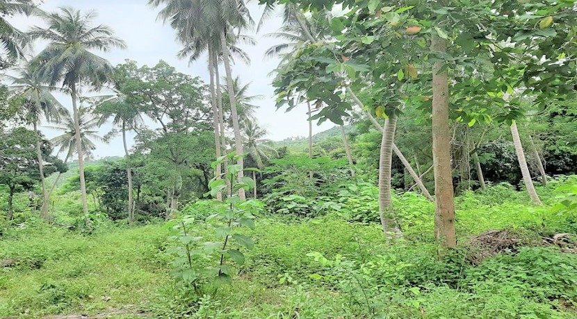 A vendre terrain au centre de Chaweng à Koh Samui 04