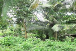 A vendre terrain plat à Maenam Koh Samui