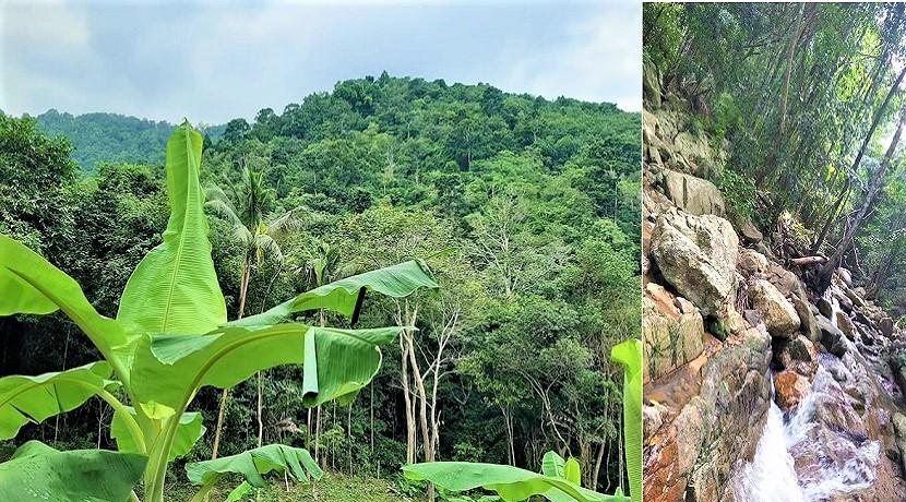 A vendre terrain avec cascade à Maenam Koh Samui – 8000 m² – chanote