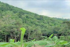 A vendre terrain avec cascade à Maenam Koh Samui 04