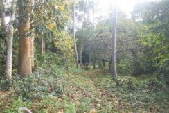 A vendre terrain avec rivière à Maenam Koh Samui 010