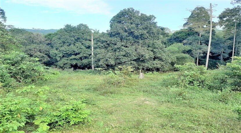 A vendre terrain avec rivière à Maenam Koh Samui 013