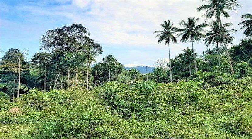 A vendre terrain avec rivière à Maenam Koh Samui 015