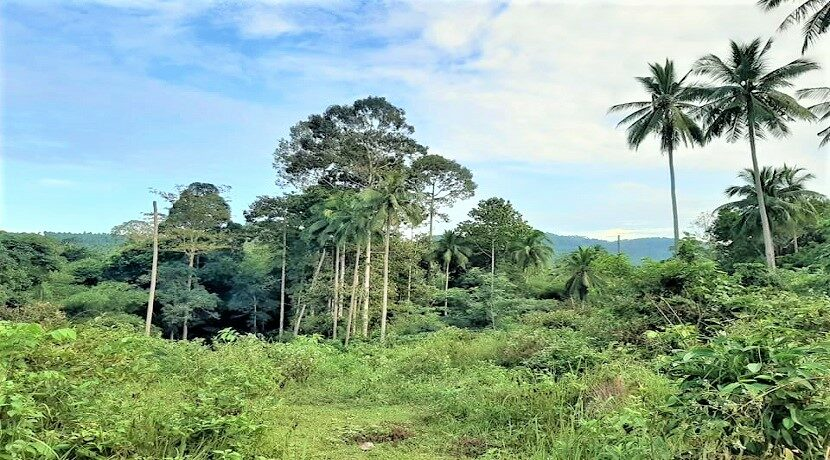 A vendre terrain avec rivière à Maenam Koh Samui 06