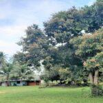 A vendre terrain plat Ban Tai Koh Samui