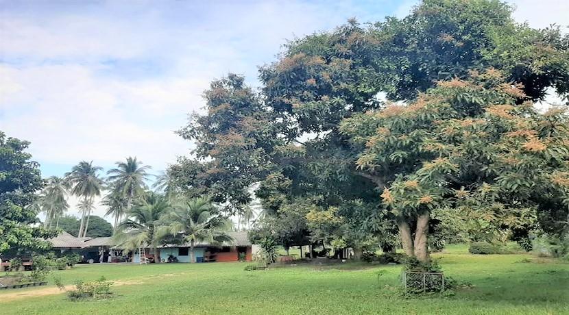 A vendre terrain plat Ban Tai Koh Samui – 228 m² – 264 m² – Chanote