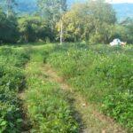 A vendre terrain plat au centre de Lamai Koh Samui