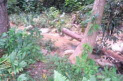 Terrain vue montagne cascade à Maenam Koh Samui à vendre